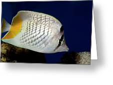 Pearlscale Or Yellow-tailed Butterflyfish Greeting Card