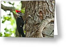 Pecking Woodpecker Greeting Card