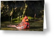 Pedernales Park Texas Bathing Cardinal Greeting Card