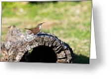 Pedernales Park Texas Carolina Wren Greeting Card