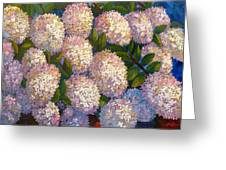 Peegee Hydrangeas Greeting Card