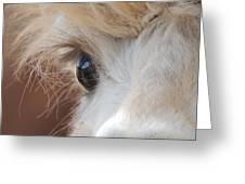 Peek A Boo Alpaca Greeting Card