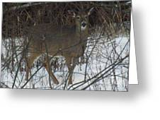 Peek A Boo Deer Greeting Card