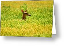 Peek A Boo Deer Greeting Card