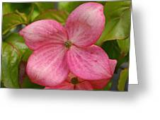 Peek A Boo Dogwood Greeting Card