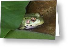 Peek A Boo Frog Greeting Card
