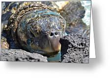 Peek-a-boo Turtle Greeting Card