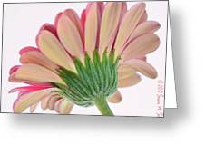 Peek A Pink Greeting Card