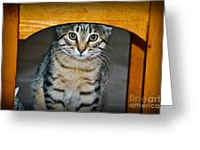 Peekaboo Kitty Greeting Card