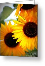 Peekaboo Sunflowers Greeting Card