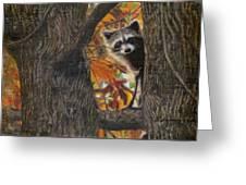 Peeking Bandit Greeting Card