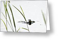 Peeking Frog Greeting Card
