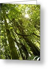 Peeking In Costa Rica Rain Forest Greeting Card
