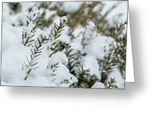 Peeking Through The Snow Greeting Card