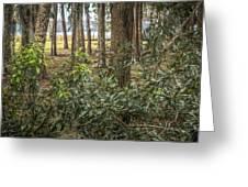 Peeking Through The Trees Greeting Card