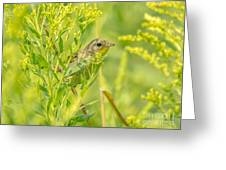 Peeking Warbler Greeting Card