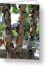 Peeling Bark Greeting Card