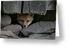 Peeping Fox Greeting Card