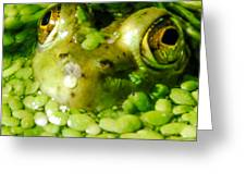 Peeping Through The Algae  Greeting Card by Optical Playground By MP Ray