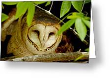 Peering Barn Owl Greeting Card
