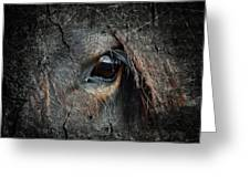 Peering Out Greeting Card