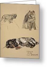 Pekinese, Chow And Spaniel, 1930 Greeting Card