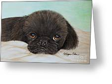 Buddy The Pekingese Greeting Card
