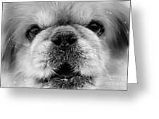 Pekingese Puppy Greeting Card