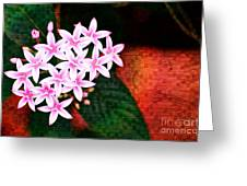 Pelargonium Graveolens II Greeting Card