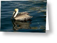 Pelican 02 Greeting Card