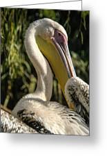 Pelican 2 Greeting Card