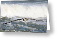 Pelican 4057 Greeting Card