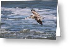 Pelican 4081 Greeting Card