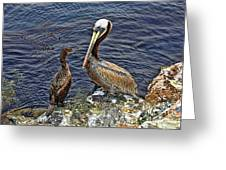 Pelican And American Black Duck Greeting Card