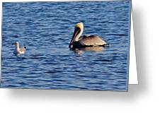 Pelican And Gull Greeting Card