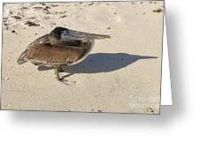 Pelican And His Shadow Greeting Card