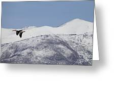 Pelican And Mountains Greeting Card