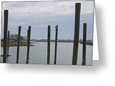 Pelican And Pilings On The Inlet Greeting Card