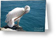 Pelican At Mykonos Greeting Card