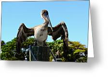 Pelican At Rest Greeting Card