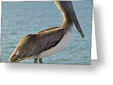 Pelican At The Gulf Greeting Card