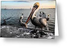 Pelican At The Pier Greeting Card