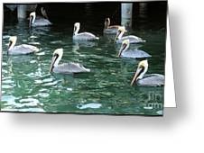 Pelican Ballet Greeting Card