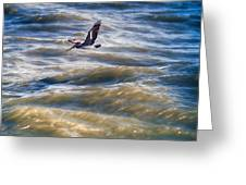 Pelican Briefly Greeting Card