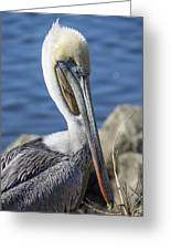 Pelican By The River Greeting Card