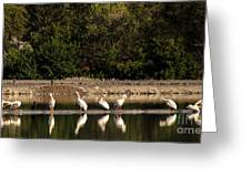 Pelican Clean Up Time Greeting Card