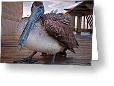 Pelican Close And Low Greeting Card