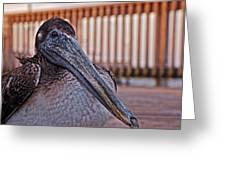 Pelican Eye Greeting Card