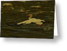 Pelican Flying Low Greeting Card