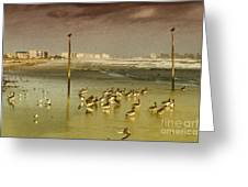 Pelican Haven Greeting Card